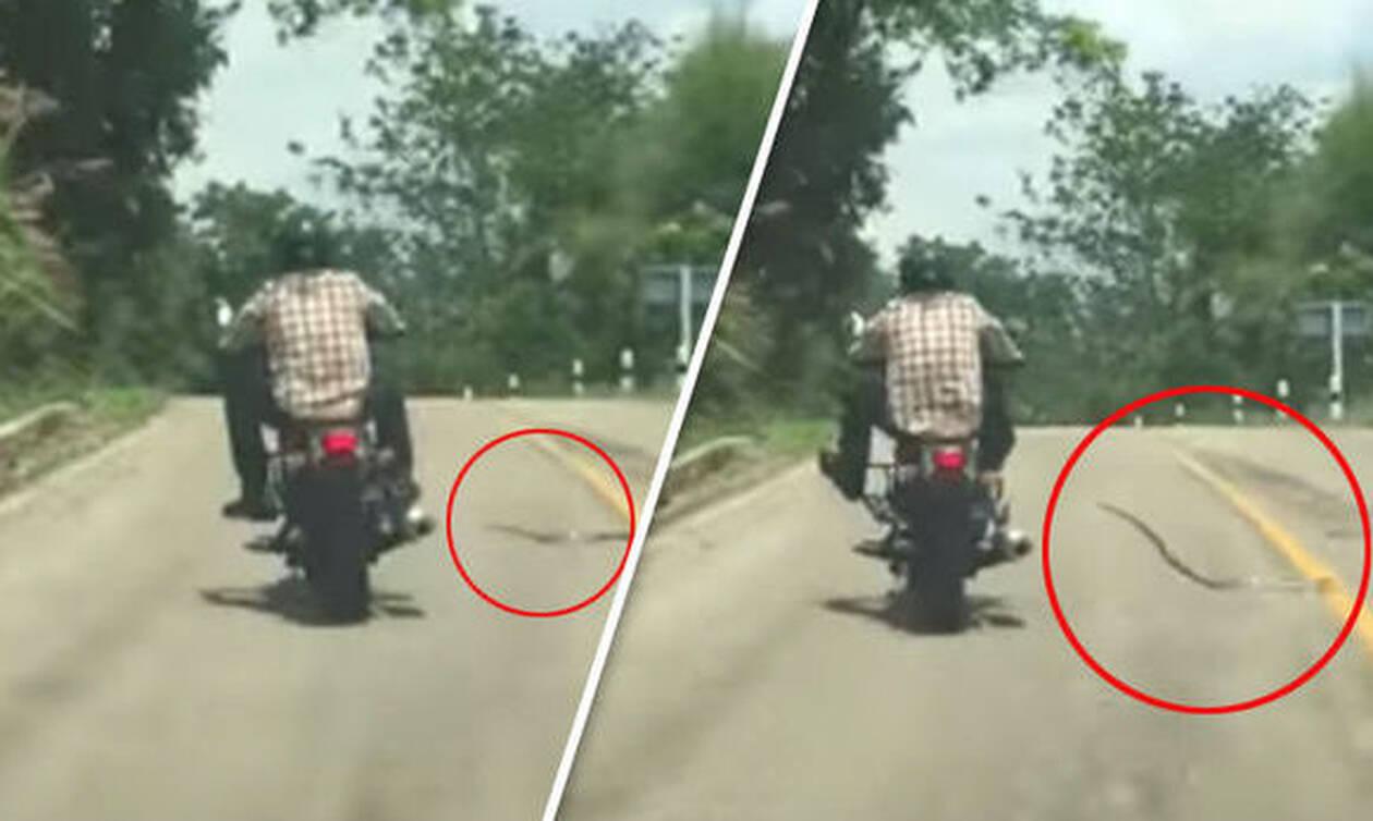 Φίδι κάνει «πέσιμο» σε ανυποψίαστο μοτοσικλετιστή (vid)