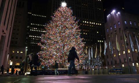 Γιατί τα έλατα θεωρούνται χριστουγεννιάτικα δέντρα;