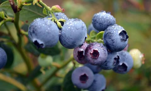 Όποιος τρώει αυτό το φρούτο βγαίνει πάντα κερδισμένος!