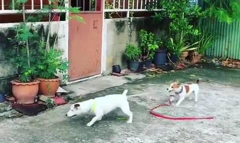 Αυτό δεν είναι σκύλος, είναι… άνθρωπος! Δείτε το απίθανο (vid)