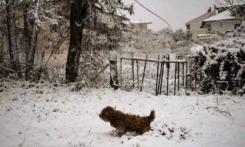 Καιρός – Προειδοποίηση Καλλιάνου: Πλησιάζει η ψυχρή εισβολή – Θα χιονίσει και στην Αθήνα