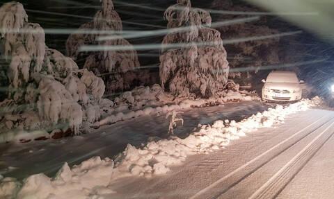 Καιρός-«Ηφαιστίων»: Πυκνή χιονόπτωση στο Μαίναλο - Υπέροχες εικόνες