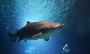 Τρόμος στη θάλασσα: Λευκός καρχαρίας κατασπάραξε δύτη (pics)