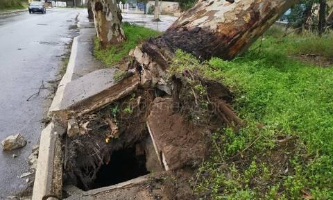 Ηφαιστίων: Απίστευτες εικόνες στα Χανιά - Ξεριζώθηκε δέντρο στη Σούδα