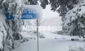 To Newsbomb.gr στα Βίλια: «Πέπλο» χιονιού σκέπασε το ορεινό χωριό της Αττικής (pics+vids)