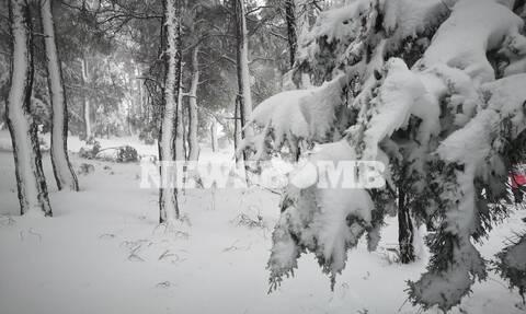 Καιρός: Θα υποχωρήσει ο «Ηφαιστίων» αλλά όχι... ακόμα - Δείτε πού θα χιονίσει σήμερα (ΧΑΡΤΕΣ)