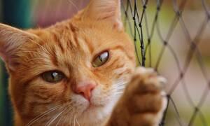 Αναζητούσαν την γάτα τους - «Πάγωσαν» όταν ανακάλυψαν πού βρισκόταν (pics)