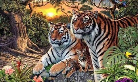 Τρομερό: Πόσες τίγρεις μπορείς να βρεις σε αυτή τη φωτογραφία;