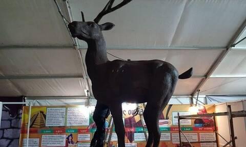 Κατερίνη: Έφτιαξαν το μεγαλύτερο σοκολατένιο ελάφι του κόσμου (photos)