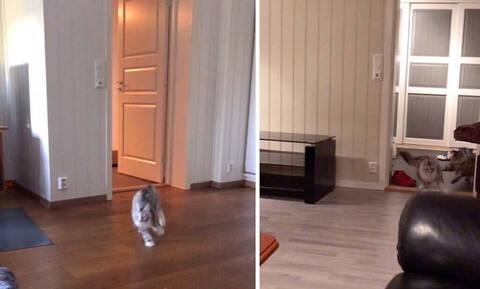 Δεν έχεις γελάσει ξανά τόσο πολύ: Δες πώς κάνουν αυτές οι γάτες όταν ακούνε για φαγητό