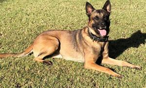 ΣΟΚ: Σκύλος κατακρεούργησε γυναίκα - Την βρήκαν νεκρή σε πάρκο