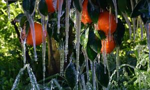 Απίστευτες εικόνες από τον παγετό στην Αργολίδα