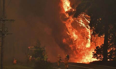Αυστραλία: Υπό μερικό έλεγχο η πυρκαγιά που σκότωσε 27 ανθρώπους και 1 δισ. ζώα