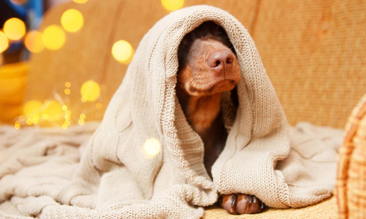 Γιατί τον χειμώνα κοιμόμαστε περισσότερο; – Tips για ποιοτικό ύπνο (εικόνες)
