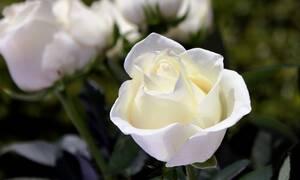 Τρίκαλα: Η τελευταία επιθυμία του «πάγωσε» τους πάντες - Δείτε τι έγινε στην κηδεία του (pics)