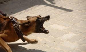 Τραγωδία: Νεκρό βρέφος - Το κατασπάραξαν σκυλιά