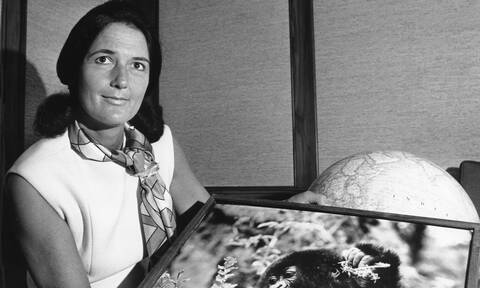 Νταϊάν Φόσεϊ: Η ερευνήτρια που και έδωσε τη ζωή της για τους γορίλες