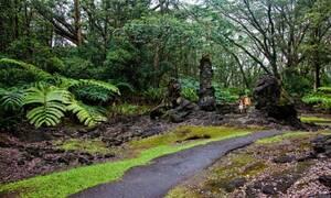 Χαβάη: Το δάσος από λάβα που «κόβει» την ανάσα
