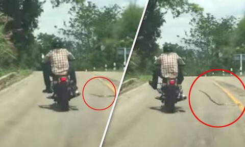 Φίδι κάνει «πέσιμο» σε ανυποψίαστο μοτοσικλετιστή! (vid)