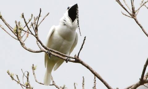 Τρομακτικό: Δεν θα πιστέψεις τι μπορεί να κάνει αυτό το πτηνό