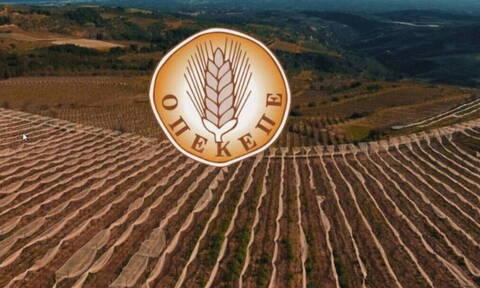 Νέα πληρωμή του ΟΠΕΚΕΠΕ: Στο ταμείο 8.383 αγρότες