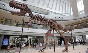 Αποκαλύψεις επιστημόνων: Γιατί εξαφανίστηκαν οι δεινόσαυροι;