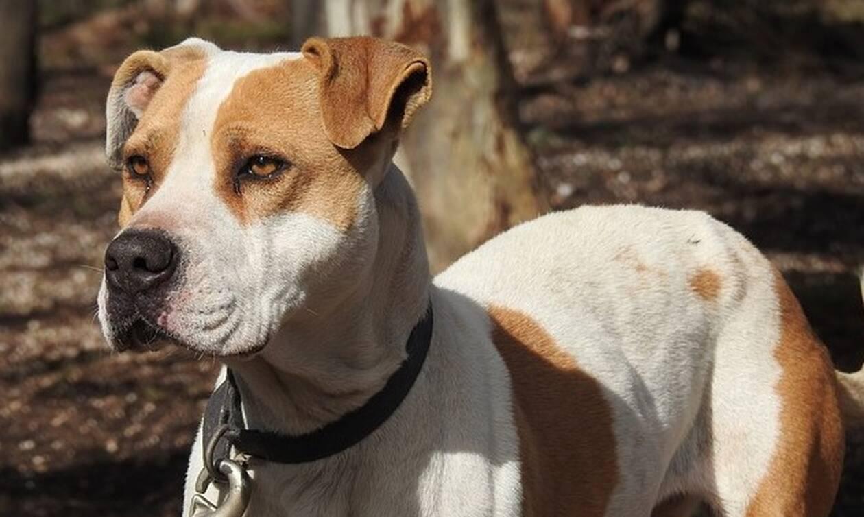 Τραγωδία στη Μαγνησία: Πέθανε και ο σκύλος της την έφαγε