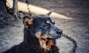 Ανατροπή στη Μαγνησία: «Ο σκύλος δεν σκότωσε» υποστηρίζει ο σύζυγος της νεκρής γυναίκας (vid)