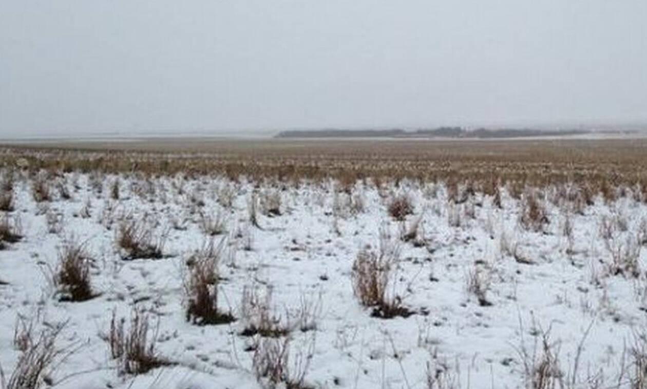 Τρομερή οφθαλμαπάτη: Χιονίζει ή υπάρχουν πολλά πρόβατα;