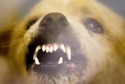 Μαγνησία: Σοκ από την ιατροδικαστική έκθεση - Η γυναίκα πέθανε από τις δαγκωματιές του σκύλου της