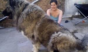 Αυτό δεν είναι σκυλί, είναι αρκούδα κανονική! (vid)