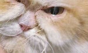 Αυτή η γάτα είναι πάντα θυμωμένη!