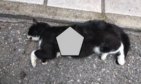 Κτηνωδία στη Θεσσαλονίκη: Βασάνισαν και σκότωσαν τη γάτα του Αντιδημάρχου