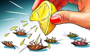 Δώδεκα φυσικοί τρόποι για να απαλλαγείτε από τις κατσαρίδες (vid)