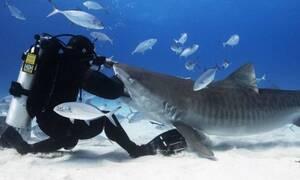 Καρχαρίας επιτίθεται σε δύτη από το πουθενά (video)