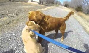 Σκυλίτσα συναντάει τη μαμά της μετά από 3 μήνες - Δείτε αντιδράσεις