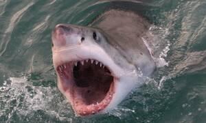 Αυτός είναι ο πιο λυσσασμένος καρχαρίας όλων των εποχών! (video)