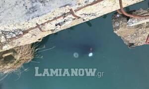 Λαμία: Κλέφτες ρίχνουν τα κλεμμένα αυτοκίνητα στον Σπερχειό – Απίστευτες εικόνες (pics)