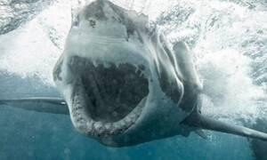 Εξαγριωμένος καρχαρίας δαγκώνει με μανία το… θύμα του! (vid)