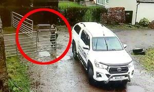 Σύζυγος κάνει… ρεζίλι την γυναίκα του! Δεν μπορεί να κλείσει δύο πόρτες (vid)