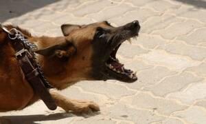 Φρίκη: 35χρονος λιποθύμησε και τον έφαγε ο σκύλος του