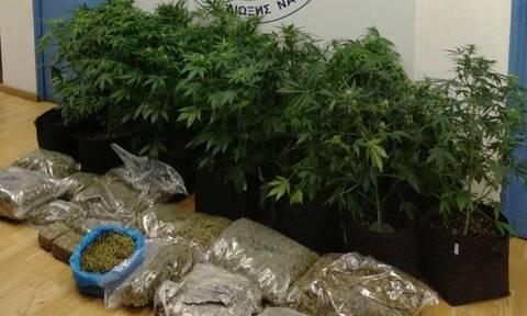 Έξι συλλήψεις σε αστυνομική επιχείρηση για καλλιέργεια και διακίνηση ναρκωτικών
