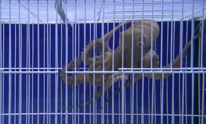 Έβαλαν χταπόδι σε κλουβί - Δεν πίστευαν αυτό που ακολούθησε (vid)