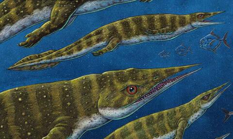 Αυτό είναι το παράξενο πλάσμα που ανακαλύφθηκε στην Αλάσκα