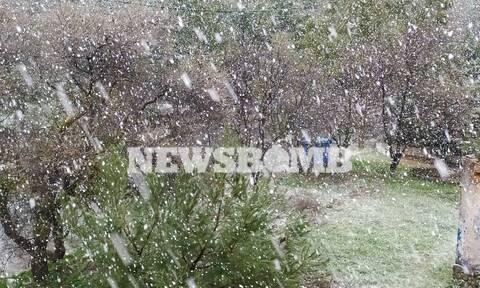 Καιρός: Χιόνια στην Αττική - Δείτε σε ποιες περιοχές το έχει στρώσει