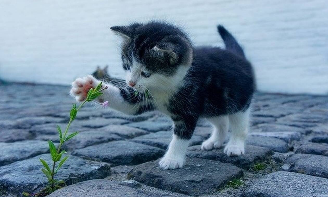 Θα πάθεις πλάκα αν δεις τι κάνει ένα γατάκι σε χωριό της Εύβοιας