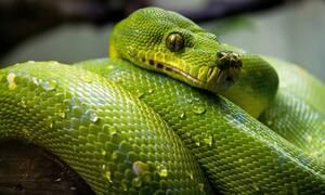 Είδαν φίδι να τους πλησιάζει - Αυτό που έκαναν μετά ήταν μοναδικό (vid)