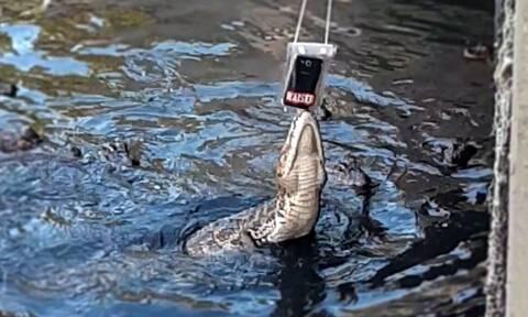 Κατέβασε το κινητό μια  για να τραβήξει βίντεο μια... ανάσα απ' τους αλιγάτορες! Δείτε τι έπαθε...