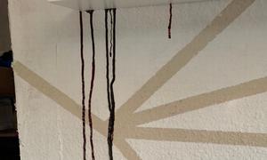 Φρίκη: Είδε στον τοίχο του να κυλάει αυτό -  Η αποκάλυψη τους «πάγωσε» όλους