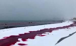 Ανατριχιαστικό: Η θάλασσα βάφτηκε με «αίμα» - Δείτε τι είχε συμβεί